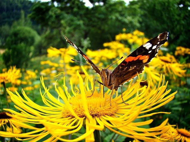 butterfly-1282344_1280